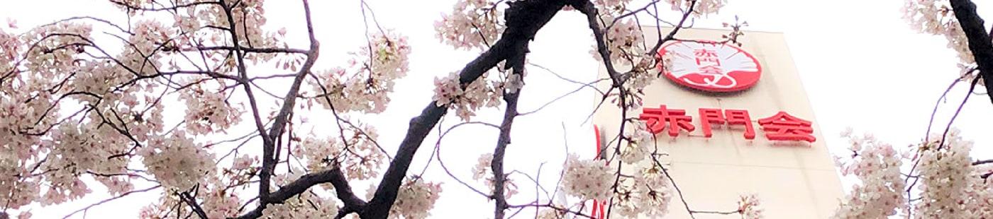 日本語教師の就職